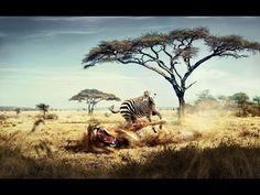 Documentary 2015 | NAT GEO documentary | AFRICA 2015 - YouTube