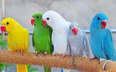 Kolorowe papugi - Malezoo.eu