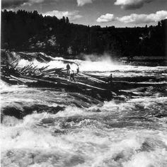 Log driving (flottning) in northern Sweden. They did this where my father grew up; very dangerous work! With a fast-moving, wild river, heavy logs that could move unpredictably—and a lot of the men didn't know how to swim... Terrifying.