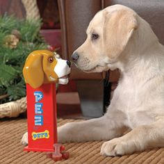 PEZ Dog Treat Dispenser, so cool! My 9 year old would love it too, she collects PEZ dispensers:)