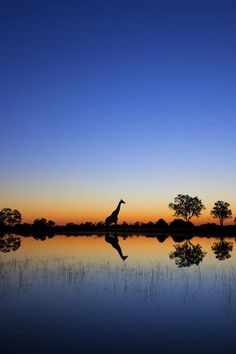 An epic sunrise deep in the Okavango Delta in Botswana.