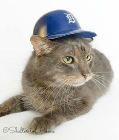 ~Life is simple...eat, sleep, and adopt someone to watch baseball with.~  (Rupert, adopted 2013)