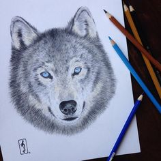 Fun fact: did you know that wolves can run about 32 km per hour, and up to 56 km per hour when necessary? #draw #drawing #sketch #sketchbook #doodle #illustration #art #artwork #myart #instaart #instaartist #instalike #instacolor #wolf #animal #wild #dada #blueeyes #artoftheday #picoftheday #photooftheday #blvart #arts_help #art_gallery #art_share #worldofpencils #goodmorning