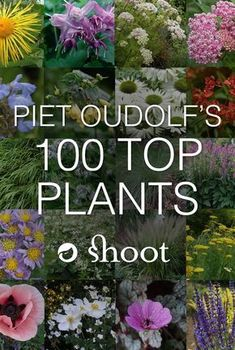 , Piet Oudolf is a world-famous garden designer, nurseryman and writer. , Piet Oudolf is a world-famous garden designer, nurseryman and writer. In he singled out the 100 plants he won't do without and we have them all . Prairie Planting, Prairie Garden, Meadow Garden, Cottage Garden Plants, Dream Garden, Cottage Gardens, Garden Pots, Gardening For Beginners, Gardening Tips