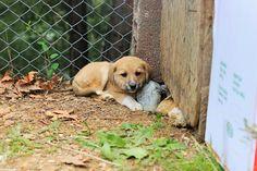 Puppy Labrador Retriever, Corgi, Puppies, Photography, Animals, Labrador Retrievers, Corgis, Cubs, Photograph