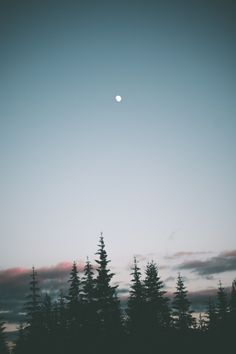 hannahkemp:  Summer Nights//Washington July...