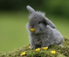 buttercup bunny...