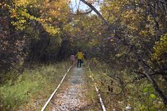 FortWhyte Alive In The Fall - So I Was Thinking Canadian Pacific Railway, First Nations, Railroad Tracks, Paths, Trains, How To Find Out, Wildlife, Journey, This Or That Questions