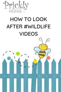 How to create a wildlife friendly garden Hedges, Children, Kids, Wildlife, Create, Garden, Youtube, Image, Young Children