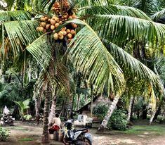 °Die Dorfstimmung ist einzigartig, diese Mischung aus alt und neu, aus traditionell und touristisch ... habe ich schon lang nicht mehr erlebt. einer meiner Lieblingsbilder ... °The village atmosphere is unique, this mixture of old and new, traditional and touristy ... I have not experienced in a long time. one of my favorite pictures ... Padang, Bali, Old And New, Strand, Traditional, My Favorite Things, Unique, Plants, Pictures