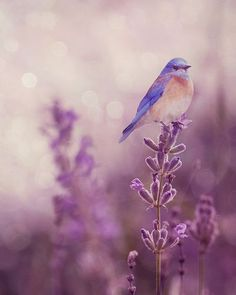 bird and lavender