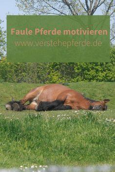 Faule Pferde motivieren, Phasen, Druck, Bodenarbeit, Reiten