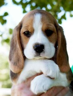 Beautiful puppy ..so cute!