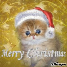 Merry Christmas Pictures, Hello Kitty Christmas, Beautiful Christmas Cards, Christmas Animals, Merry Christmas And Happy New Year, Christmas Cats, Christmas Love, A Christmas Story, Christmas Blessings