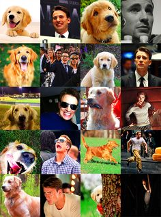 Chris Evans/Captain America + Golden Retrievers = Perfection  This is almost as good as comparing Benedict cumberbatch with the otter