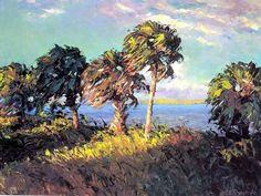 cabbage palms