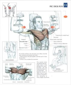 Chest Workout Wall Chart Mens Professional Fitness