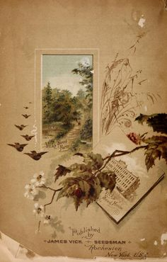 1887 - Vick's illustrated monthly magazine and floral guide / - Biodiversity Heritage Library