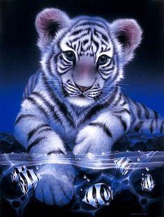 29dd9292c254 White Baby Tiger - White baby tiger by Kentaro Nishino