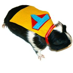 Guinea Pig Halloween Costumes - These Guinea Pig Costumes are Adorable Homemade Outfits (GALLERY)