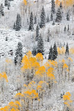 Autumn in Colorado this is how it was my whloe life growing up there -Noelle