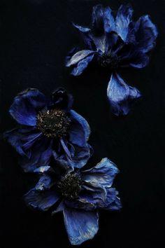 Splashes of blue ✨