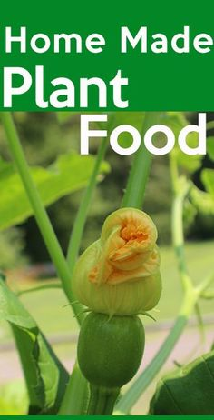 Make Your own Home made plantfood (Fertilizer), it is cheap, organics and much better than Chemical you buy. Most of the items are readily available in most homes. Home Made Fertilizer, Fertilizer For Plants, Organic Fertilizer, Homemade Plant Fertilizer, Planting Plants, Best Greenhouse, Backyard Greenhouse, Greenhouse Growing, Greenhouse Ideas