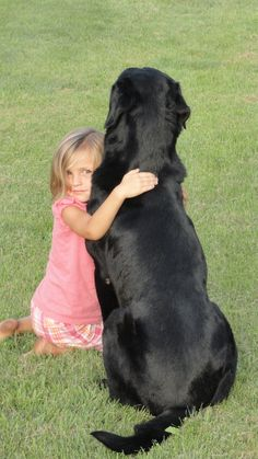 Mind Blowing Facts About Labrador Retrievers And Ideas. Amazing Facts About Labrador Retrievers And Ideas. Black Labs, Black Labrador, Black Lab Puppies, Dogs And Puppies, Doggies, Homeless Dogs, Therapy Dogs, Labrador Retriever Dog, Dog Life
