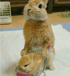 ♥ Small Pets ♥ Bunny & baby bunny go shopping Don't you just love shopping for small animal products? It's such fun finding just the right habitat, cage or hutch for your pet rabbits, hedgehogs, hamsters or guinea pigs. And who doesn't love to watch… Baby Animals Pictures, Cute Animal Pictures, Animals And Pets, Arctic Animals, Small Animals, Baby Pictures, Happy Animals, Animals Images, Nature Animals