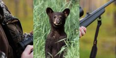 Last year's hunt killed 21 cubs and 146 juvenile and adult bears - Help protect Maryland's black bears from trophy hunters! (10100 signatures on petition)