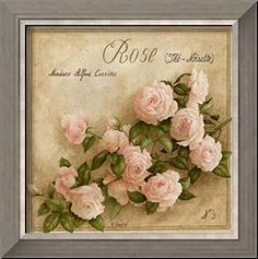 Rose The Noisette Kunstdrucke von Vincent Perriol .