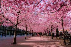 Conheça algumas das ruas mais bonitas do mundo - BOL Fotos - BOL Fotos