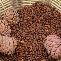 El valioso aceite de piñones es un ingrediente utilizado en nuestra cosmética natural.