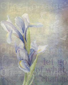 Purple Iris:  A Fine Art Watercolor Print Floral by ChezLorraines