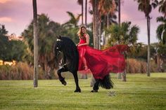Friesian Horse, Equine Photography, Horses, Photos, People, Pictures, Horse Photography, Horse, Horse Photos