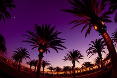 Award winning photo of the Palm Court Arts Complex at dusk at OC Great Park