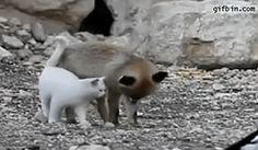 fox&cat <3