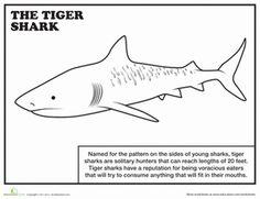 first grade animals comprehension worksheets tiger shark coloring page