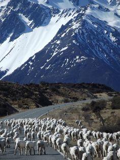 New Zealand Traffic Jam www.jamierockers.com
