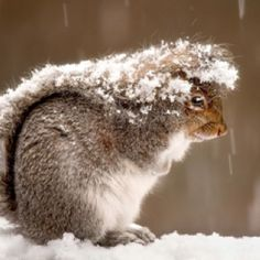What a wonderful thing the tail of a squirrel is...and the tale of a squirrel too!  Carol