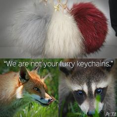 Seriously... Dead animals are NOT keychains. Animals on fur farms are killed using the cheapest methods possible including suffocation, anal electrocution, & poison. #ShopCrueltyFree #NotOurs2Wear #FurIsDead