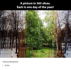 My 14 year old friend asked me why there would be 365 slices if it everyday if the year