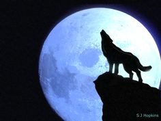 Wolf Howling at the Moon | Howling at the moon by SHopkins
