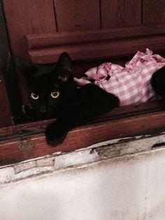 Super humide crémeux noir chatte ADDICT aide porno