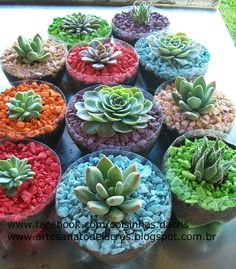 Not sure if I like this or not - but it is a cute idea. Coisinhas da Cris: Reutilizando pet no meu jardim...
