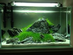 my-fish – Aquaristik Survive Projekt » Aquascaping