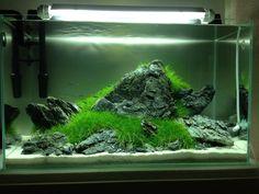 my-fish – Aquaristik Survive Projekt » Aquascaping