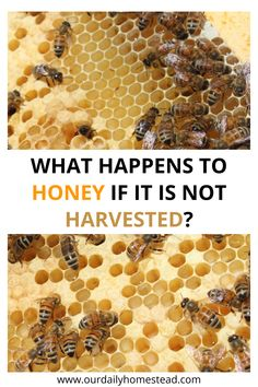Beekeeping Course, Backyard Beekeeping, Beekeeping For Beginners, How To Start Beekeeping, Hives And Honey, Honey Bees, How To Help Bees, Bee Facts, Raising Bees