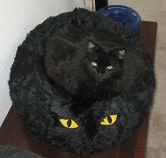 A black cat with yellow eyes on a pet pillow in this funny animal pic. A humorous kitty photo with look alikes in this feline comedy photo.