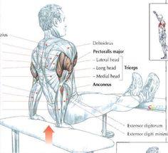 #TricepsDip #workout #gymaholic